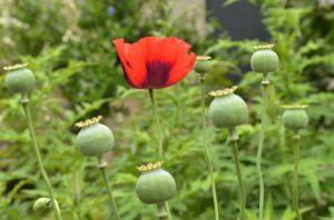 garden-1423718_640